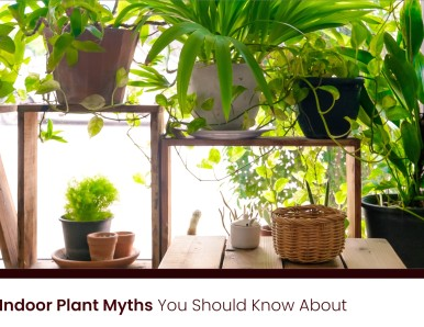 Common Indoor Plant Myths You Should Know About
