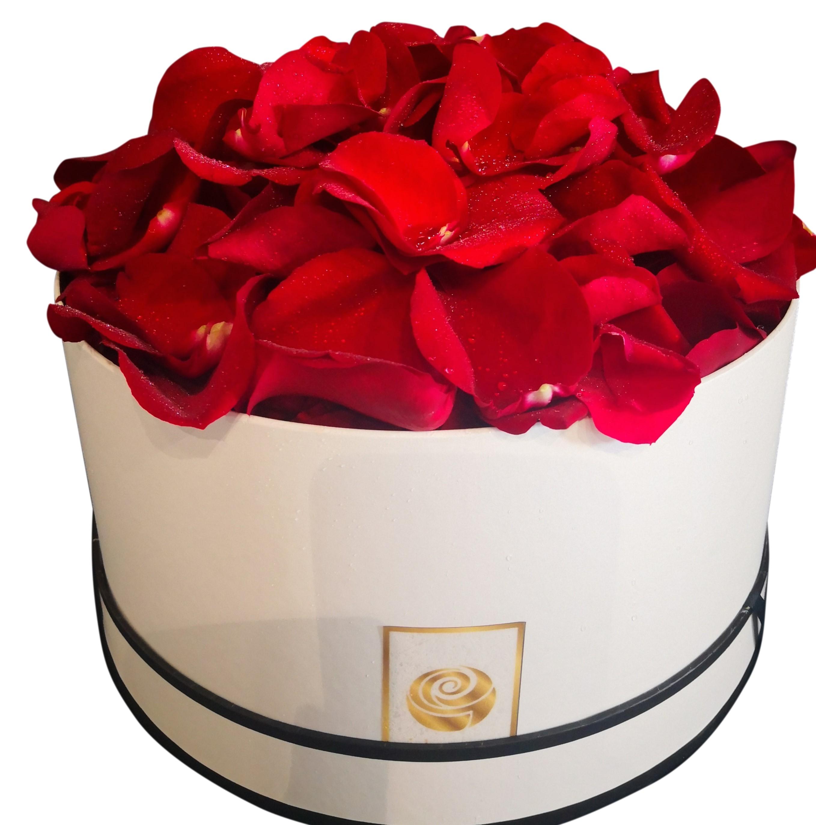 Pink Ross  petals