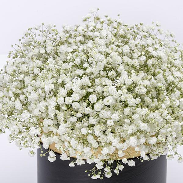 RABAT- Gypsofilla White Flowers Box